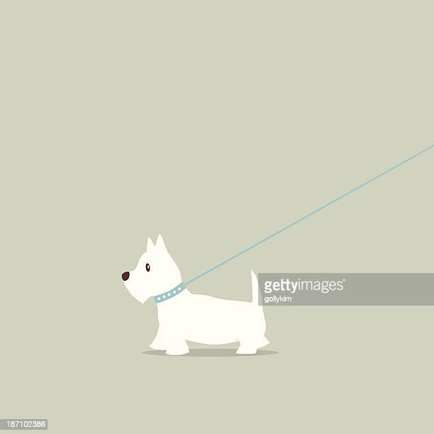walking dog on lead westie - dog leash stock illustrations, clip art, cartoons, & icons