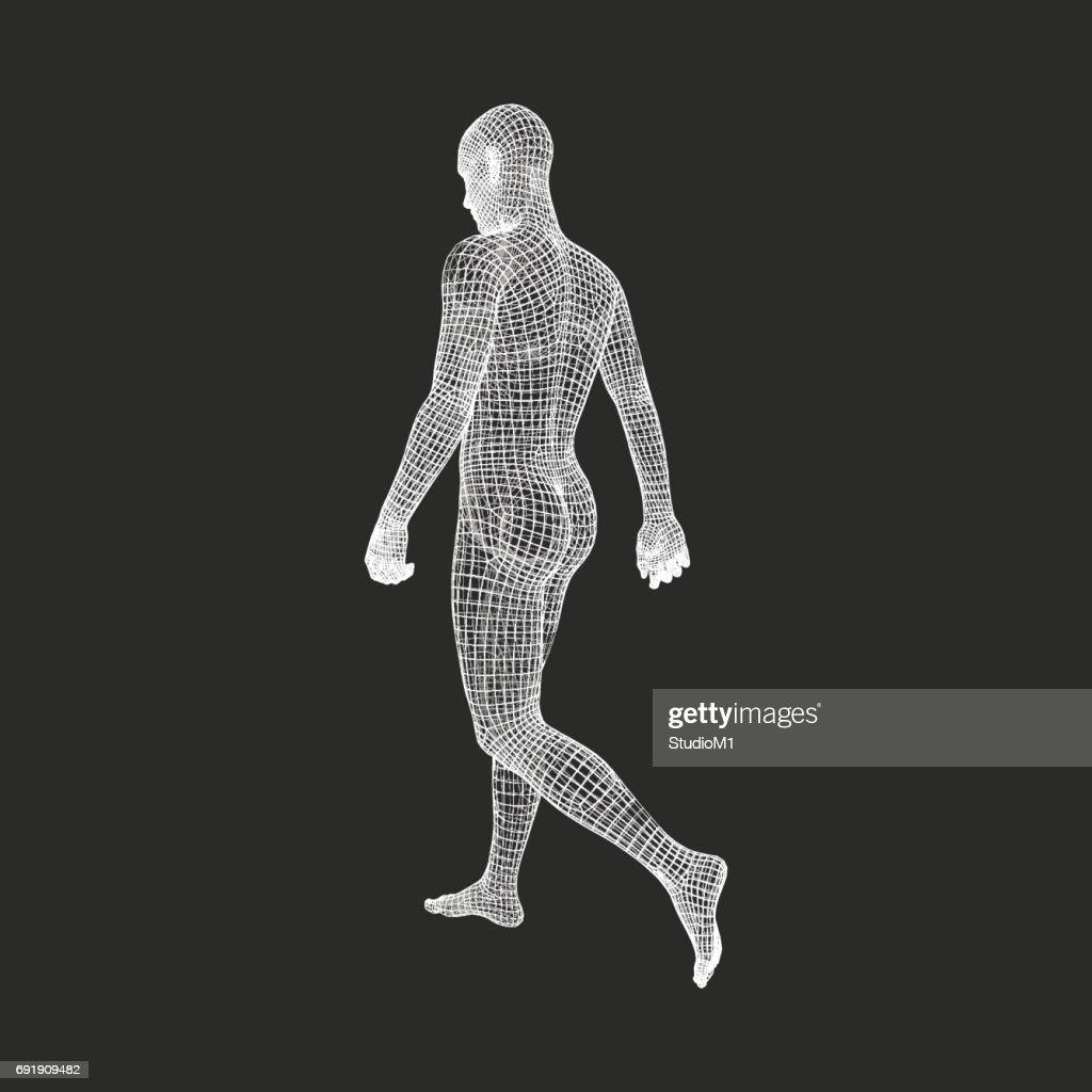 Walking Man. 3D Human Body Model. Geometric Design. Human Body Wire Model.  Vector.