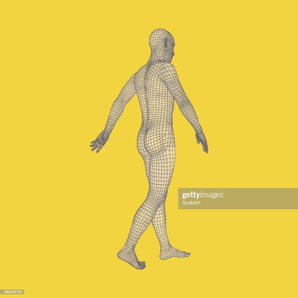 Walking Man 3d Human Body Model Geometric Design Vector Art   Getty ...