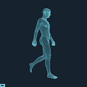 Walking Man. 3D Human Body Model.