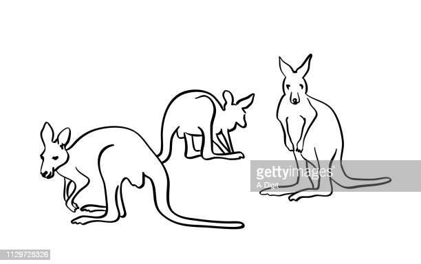 ilustrações de stock, clip art, desenhos animados e ícones de wallaby kangaroos - marsupial