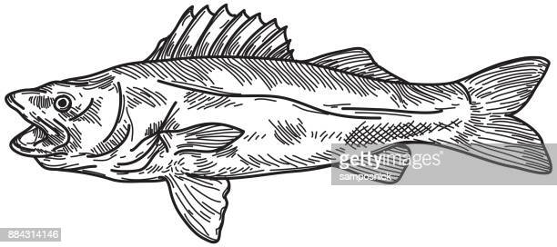 Walleye Stock Illustrations And Cartoons | Getty Images