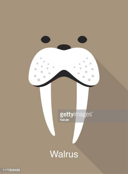walrus face icon, vector illustration - walrus stock illustrations