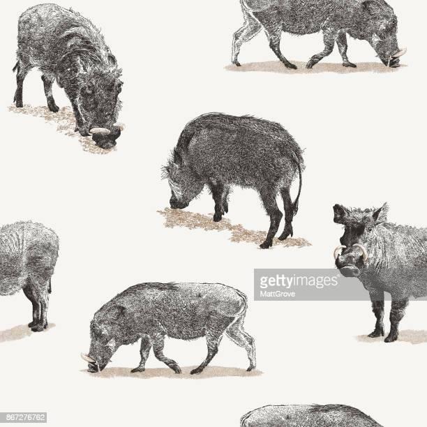 Warthog repetir patrón