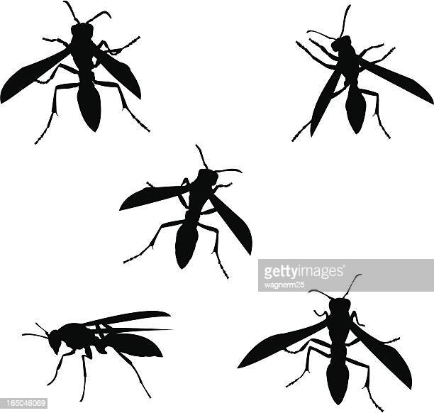 wasp silhouettes - wasp stock illustrations, clip art, cartoons, & icons