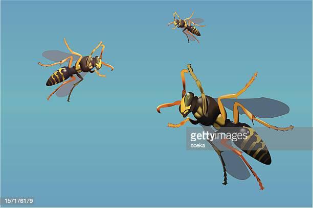 wasp - paper wasp stock illustrations