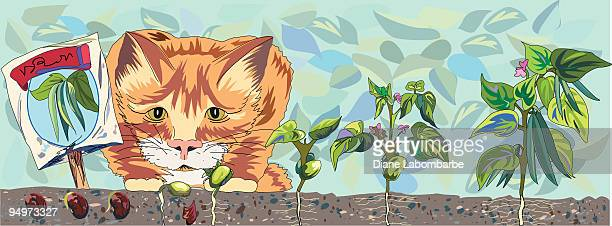 watching the garden grow. - bean stock illustrations, clip art, cartoons, & icons
