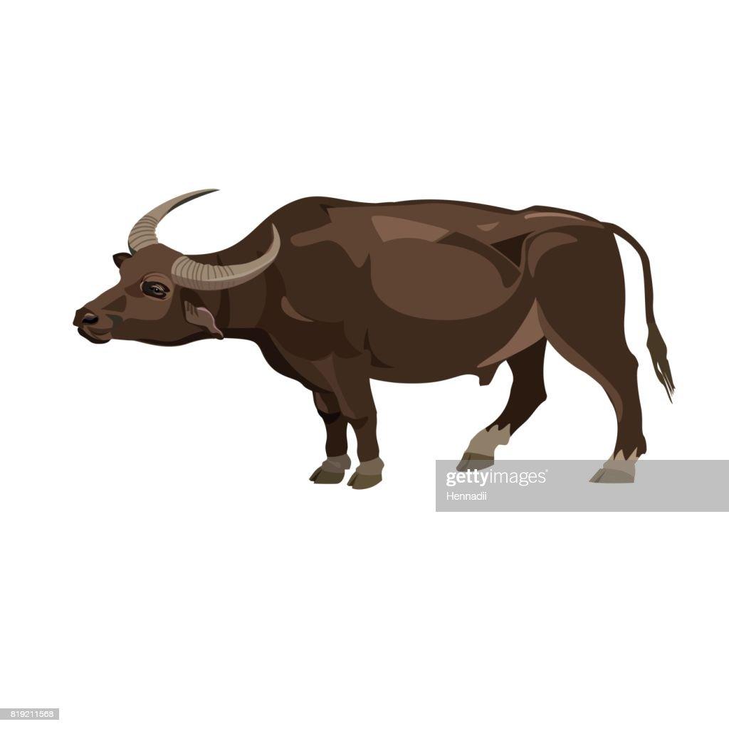 Water buffalo vector