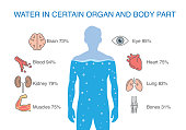 Water in certain organ and body part of human.