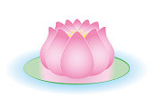 Water lily. Half opened pink feminine water symbol for tranquility, beauty, calmness and serenity - isolated vector illustration on white background.