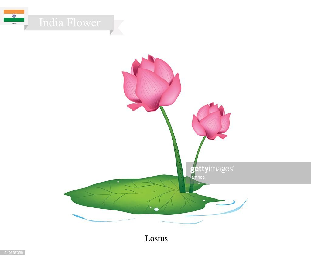 Water lily the national flower of india vector art getty images water lily the national flower of india vector art izmirmasajfo