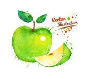 Watercolor apple.