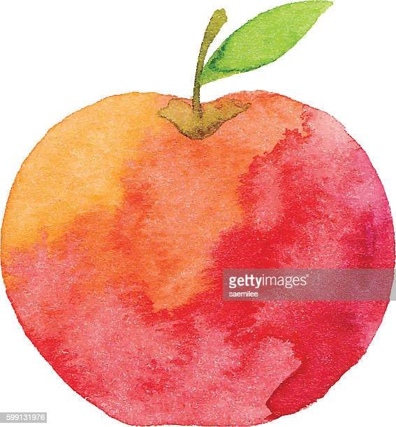 watercolor apple - apple fruit stock illustrations