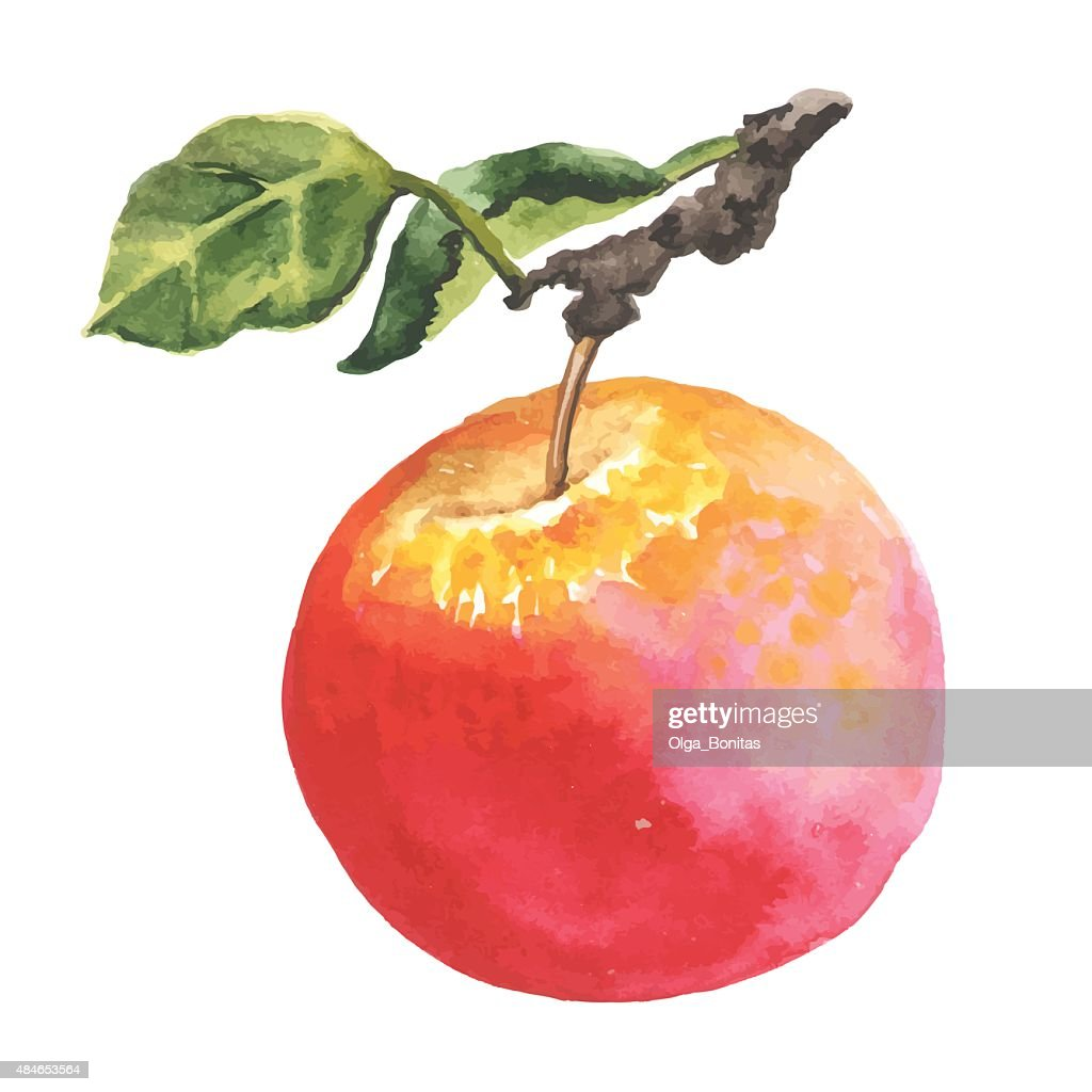 Watercolor apple with leaf