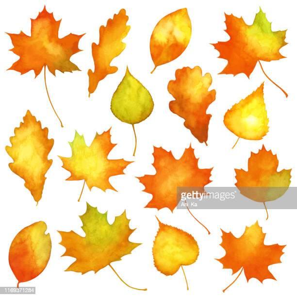 stockillustraties, clipart, cartoons en iconen met aquarel herfst bladeren - esdoornblad