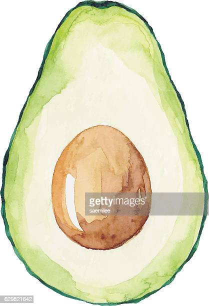 illustrations, cliparts, dessins animés et icônes de watercolor avocado - légume