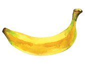 Watercolor banana fruit whole closeup isolated