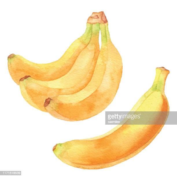 illustrations, cliparts, dessins animés et icônes de bananes à l'aquarelle - fruit