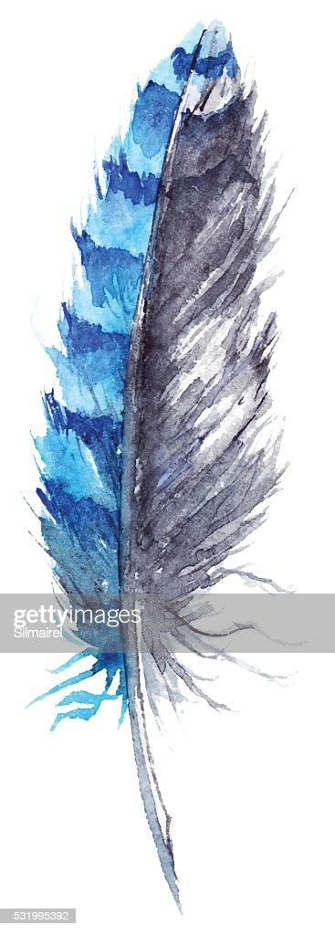 Watercolor black and blue jay feather vector isolated