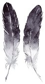 Watercolor black and white feather pair vector set isolated