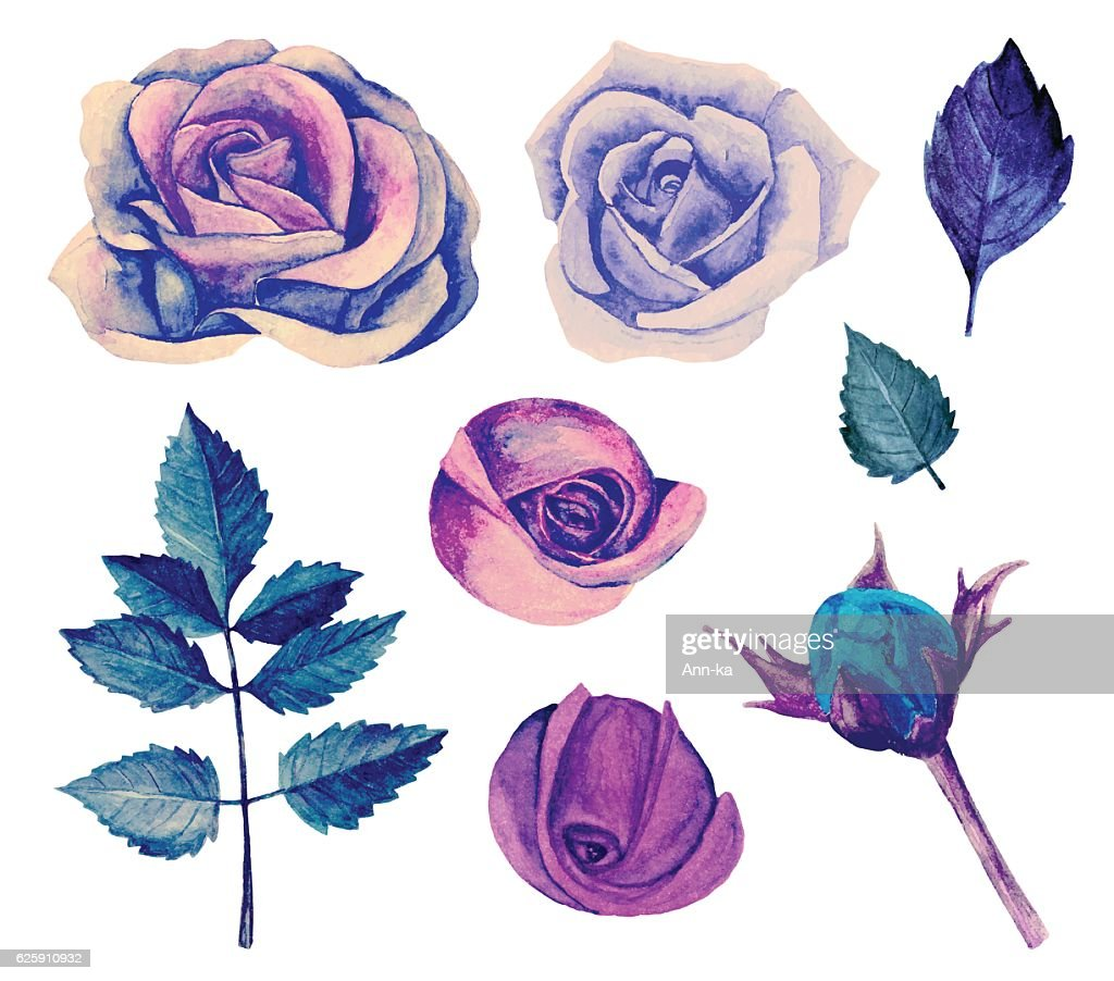 Watercolor blue roses vector isolated