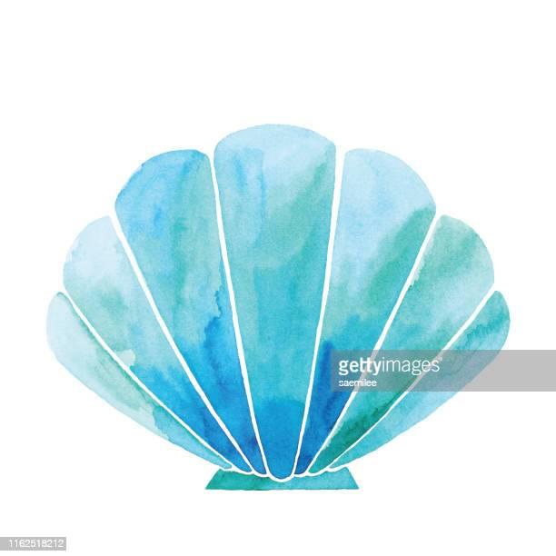 ilustraciones, imágenes clip art, dibujos animados e iconos de stock de concha azul acuarela - concha de mar