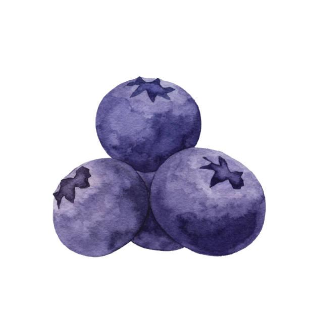 水彩藍莓 - 藍莓 幅插畫檔、美工圖案、卡通及圖標