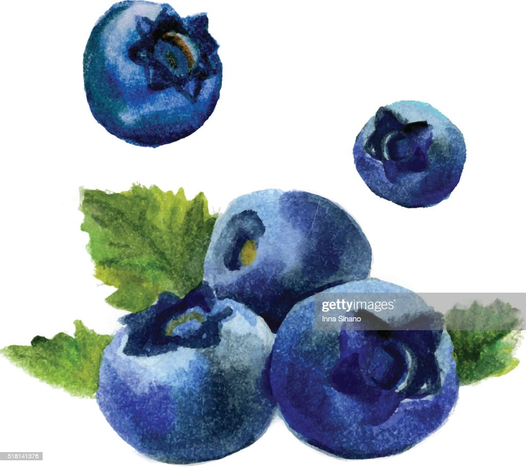 Watercolor blueberry isolated