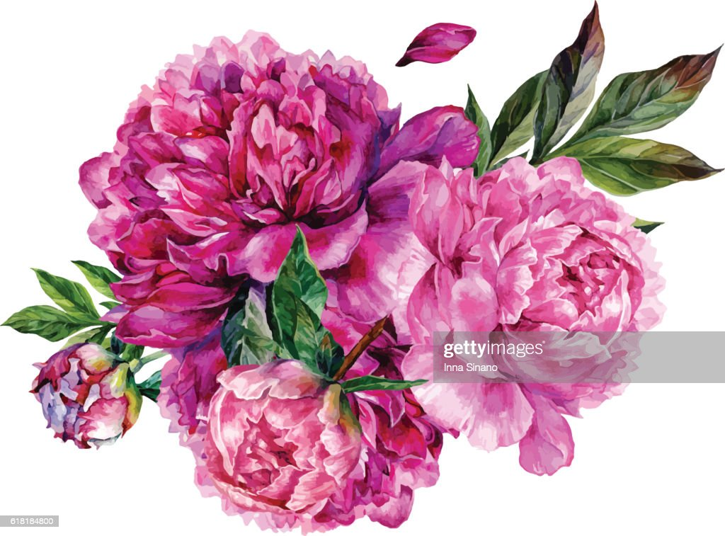 Watercolor bouquet of pink peonies.