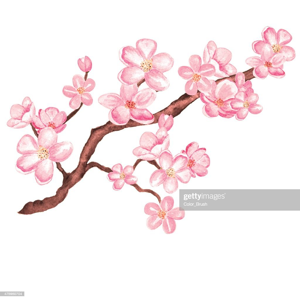 Watercolor branch blossom sakura, cherry tree with flowers
