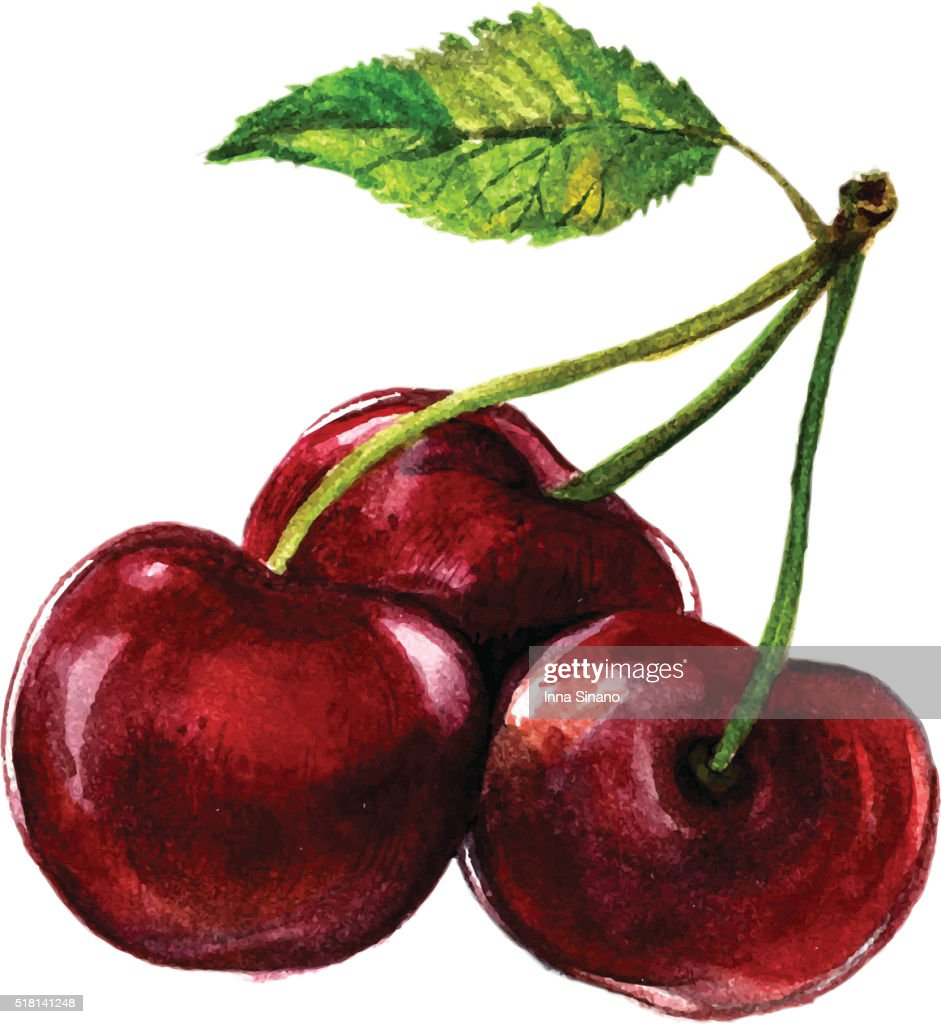 Watercolor Cherry Isolated