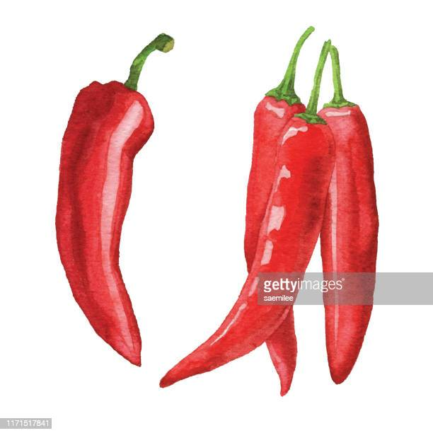 watercolor chili peppers - pepper seasoning stock illustrations