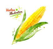 Watercolor corn.