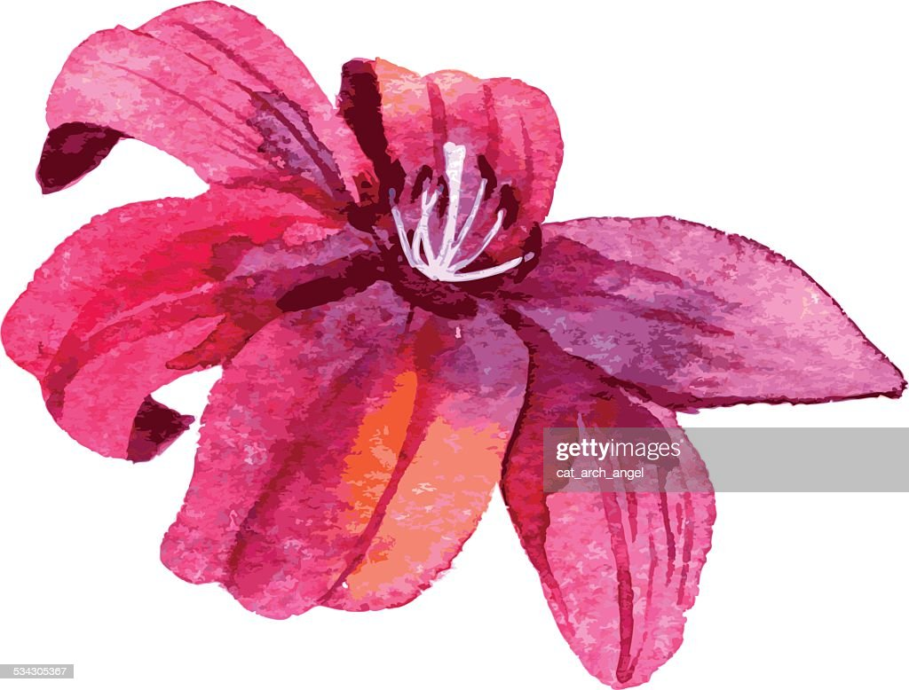 Watercolor Drawing Lily Flower Vector Art Getty Images