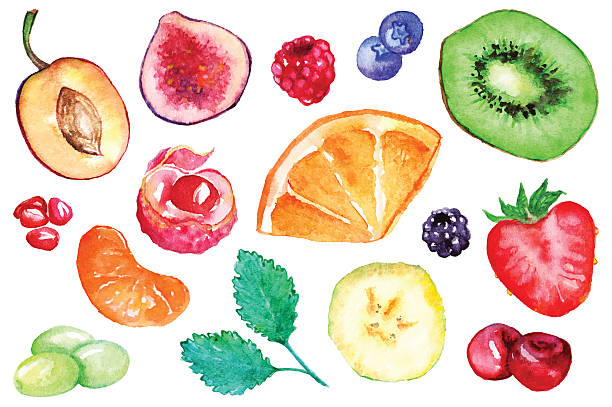 Watercolor Exotic Fruit Berry Slice Set Isolated Vector Wall Art
