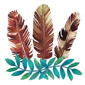 Watercolor feathers, leafs