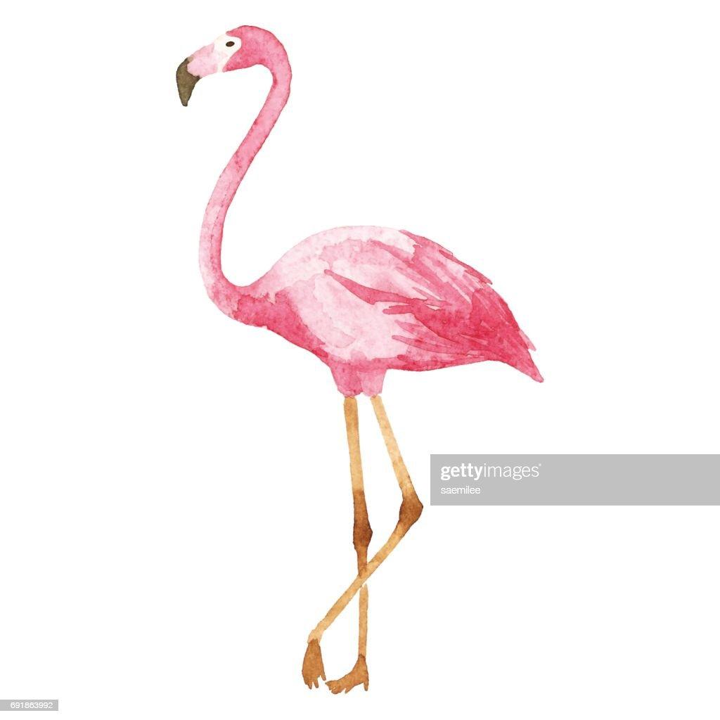 Watercolor Flamingo : Vector Art