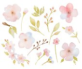 Watercolor floral set of branches of leaves and flowers.