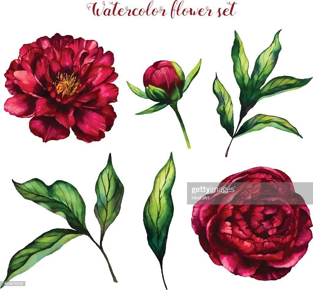 Watercolor flower set of peonies and leaves