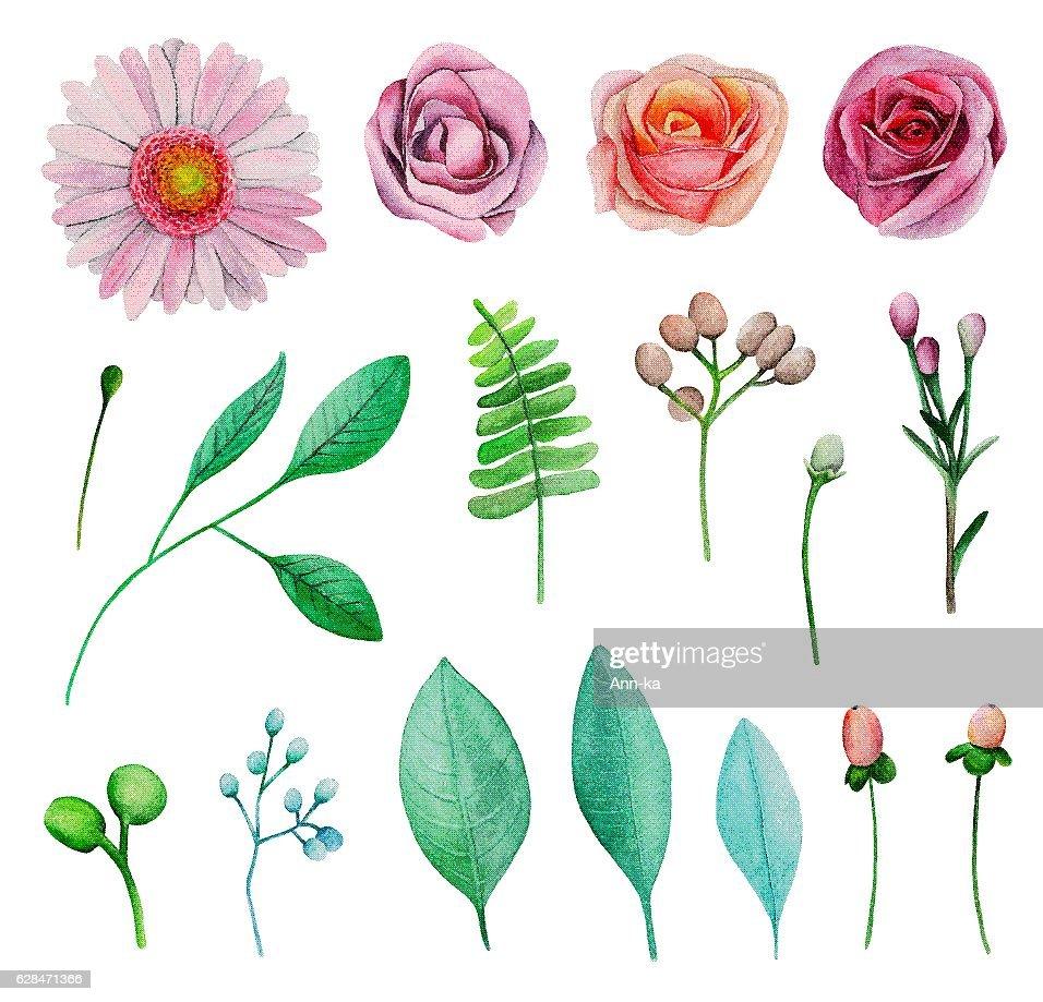 Watercolor garden flowers vector