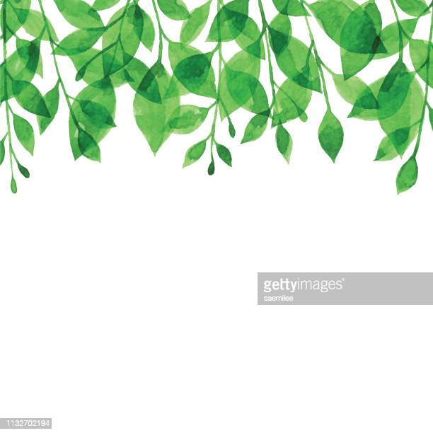 watercolor green branch bacgkround - lush stock illustrations
