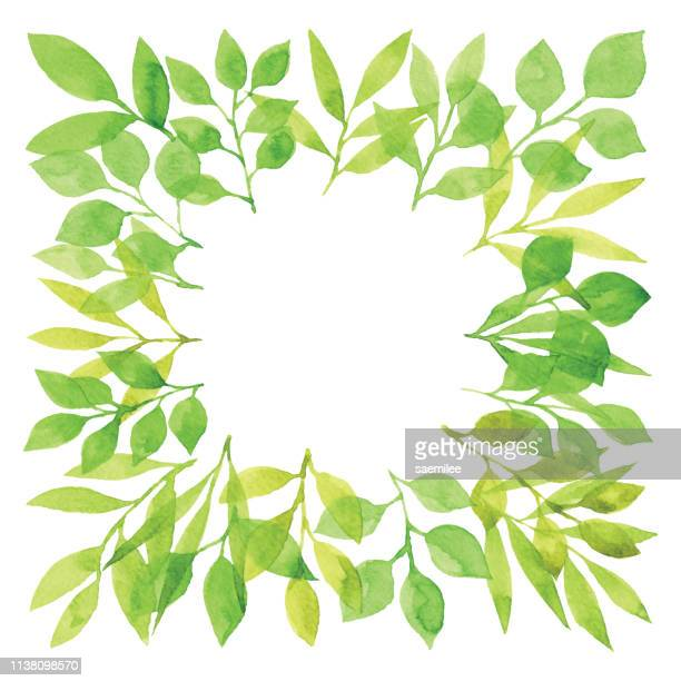 watercolor green branch frame square - branch plant part stock illustrations