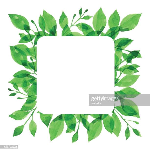watercolor green branch frame with white square - branch plant part stock illustrations