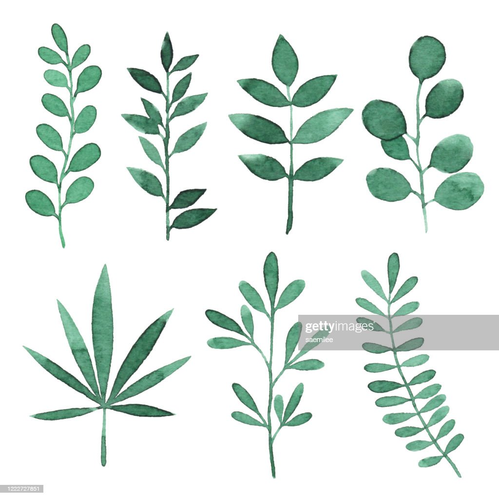Watercolor Green Branches With Leaves : stock illustration