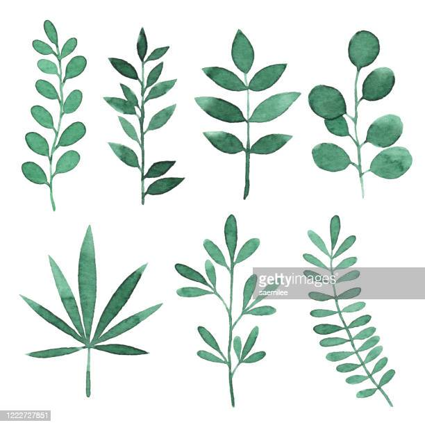 watercolor green branches with leaves - leaf stock illustrations