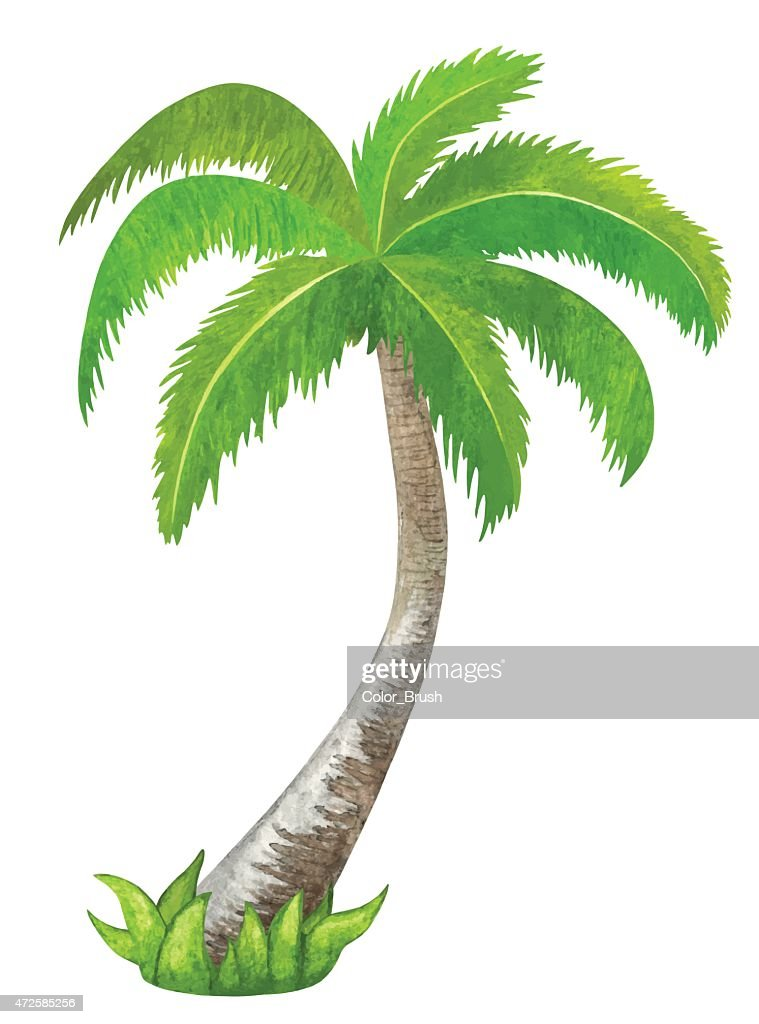 Watercolor green coconut palm tree closeup isolated