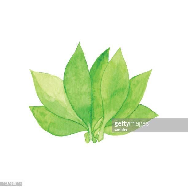 水彩緑の葉の束 - ハーブ点のイラスト素材/クリップアート素材/マンガ素材/アイコン素材