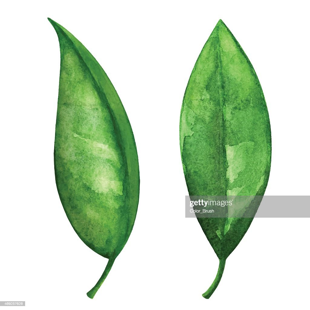 Watercolor green leaves set closeup isolated