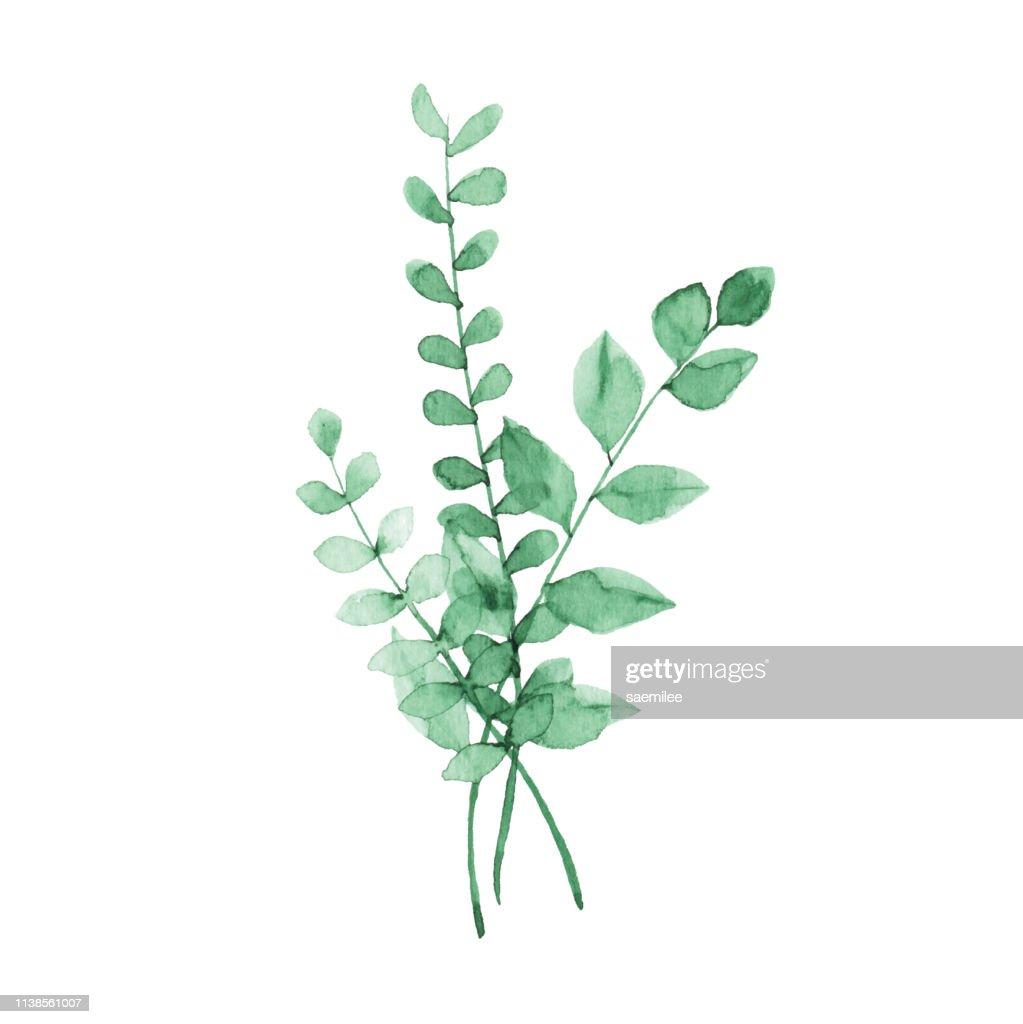 Aquarell grüne Pflanzen : Stock-Illustration