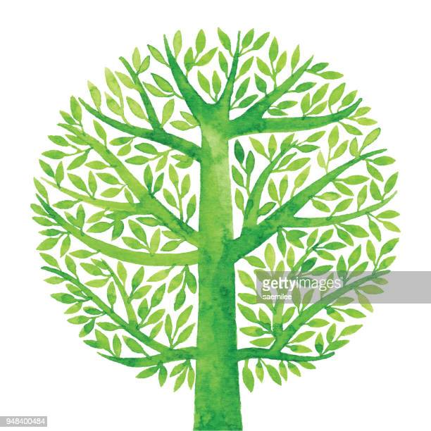 watercolor green tree circle - tree stock illustrations